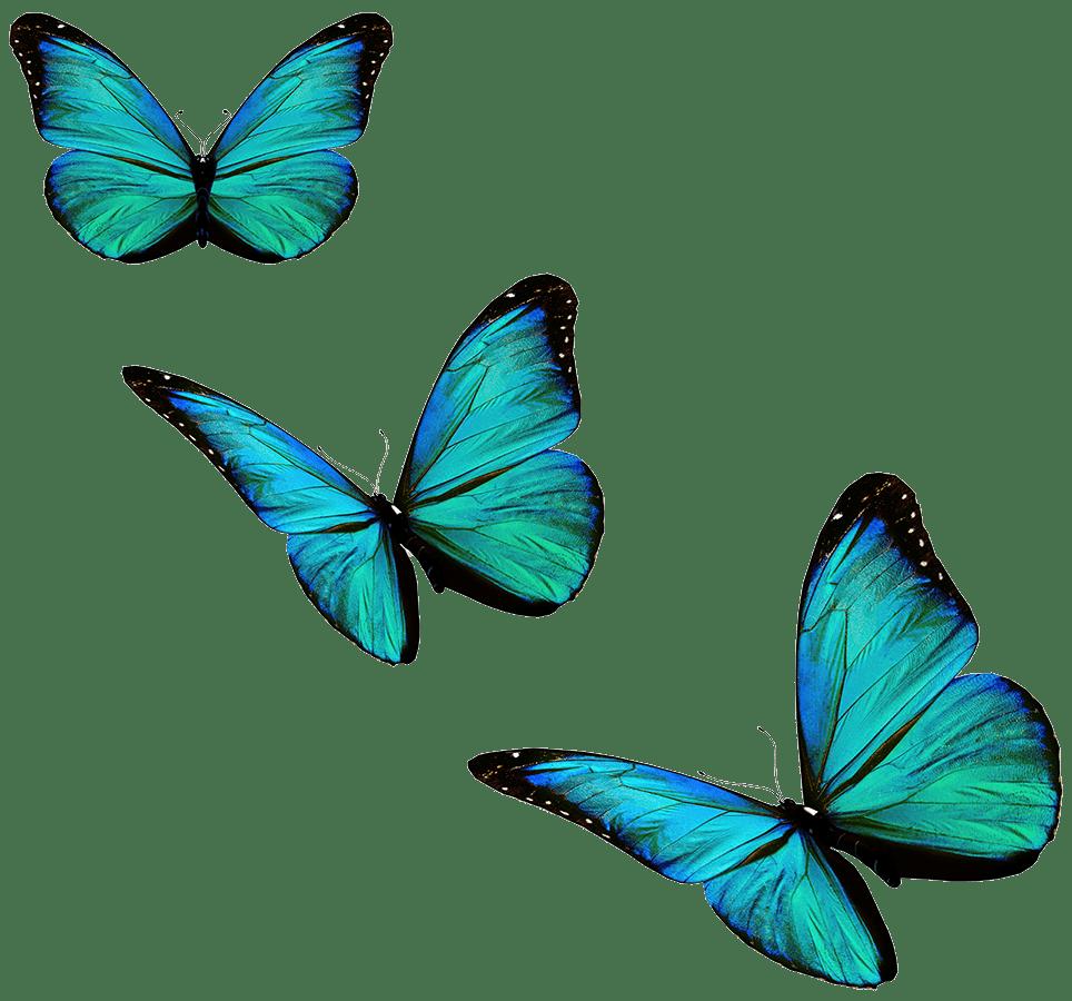 psychoeducation et coaching familial